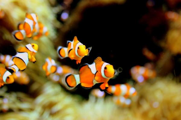 Nemo di robinhood