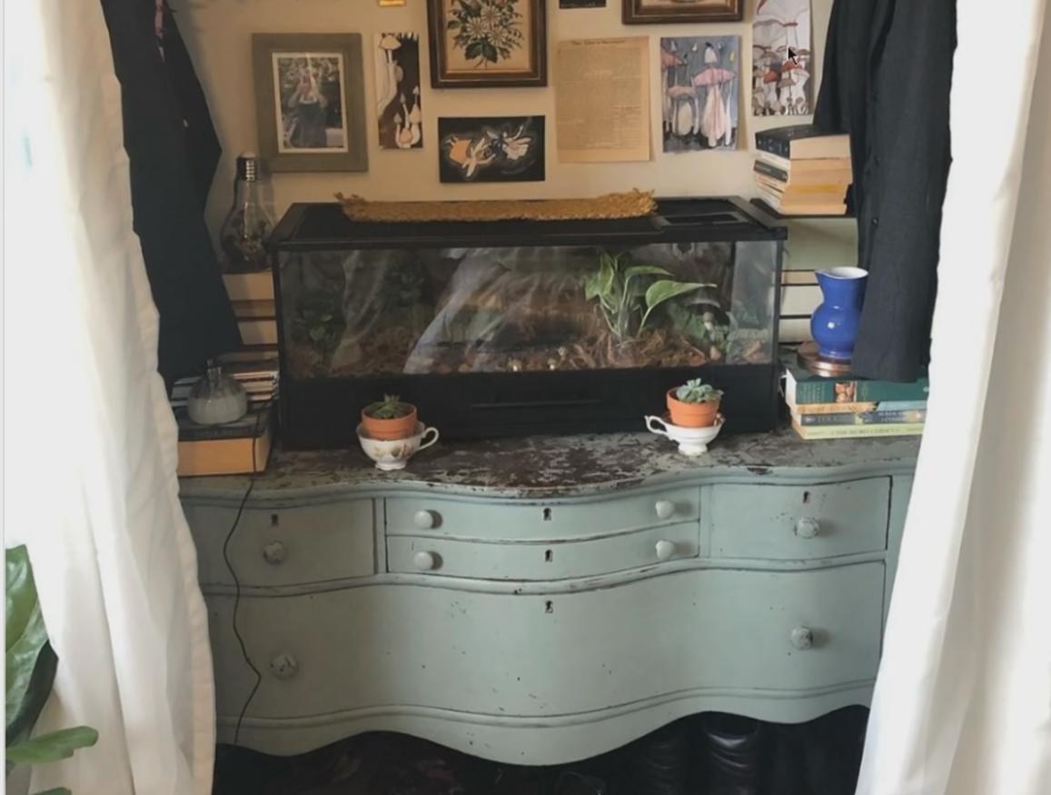 Terrarium on dresser in nook