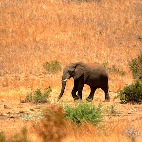 by Christo W. Meyer - Novices Only Wildlife