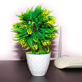 flower vas and a wifi on black table by Basant Malviya - Uncategorized All Uncategorized ( wifi, black, vas, table, flower )