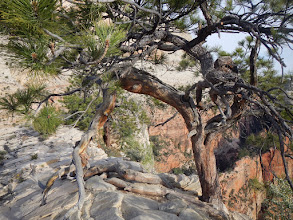Photo: A few trees cling to the rocks up here.