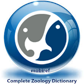 Zoology Dictionary Free