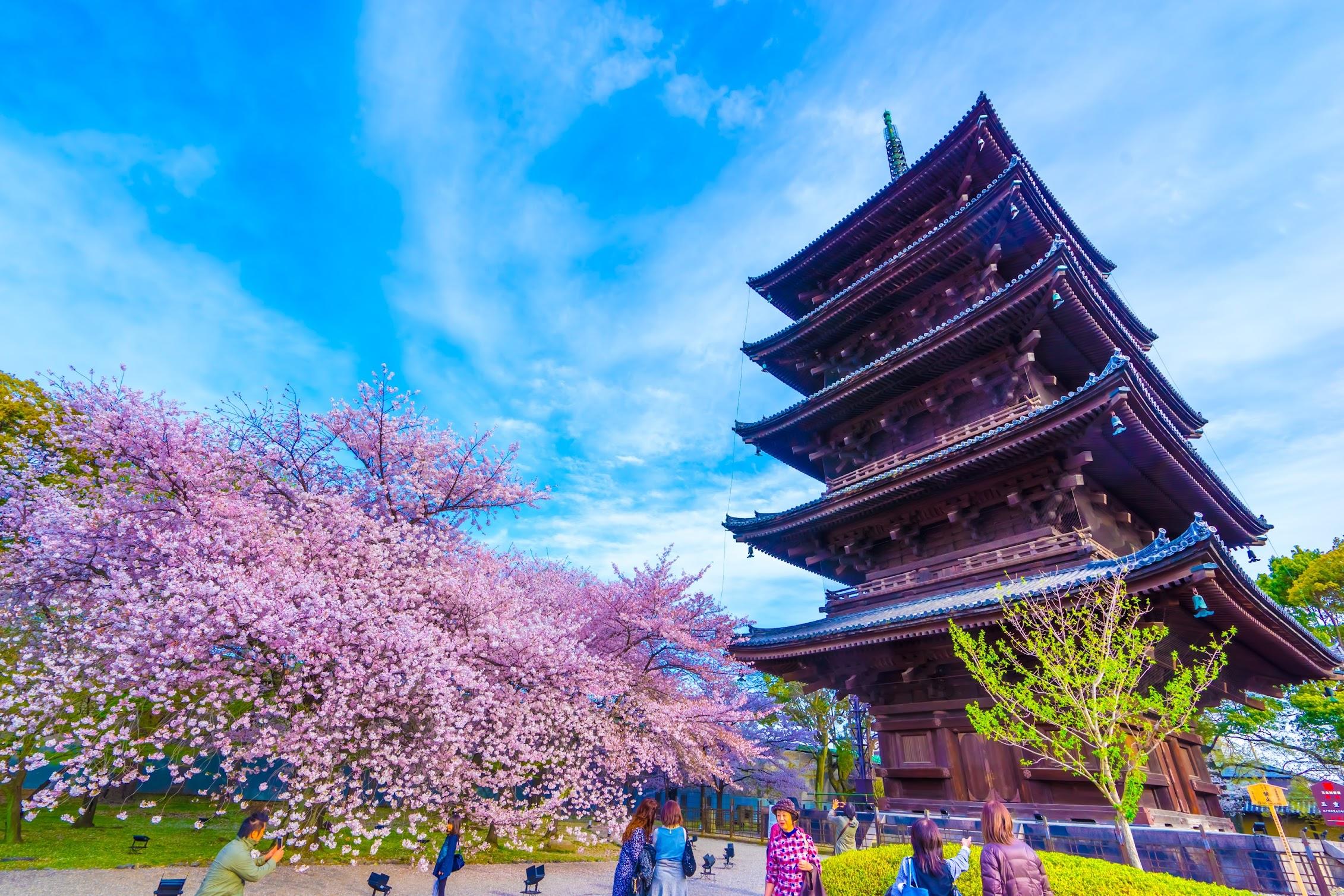 京都 東寺 桜3