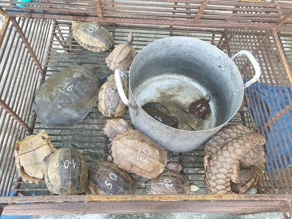 Cá thể tê tê và rùa thu được trên xe