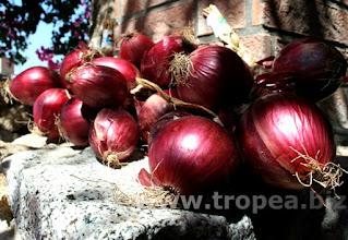 Photo: Cipolla rossa di Tropea, la cipolla dolce.