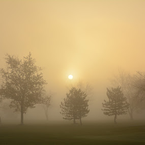 A Foggy Morning by Thomas Fitzrandolph - Landscapes Sunsets & Sunrises ( nature, fog, niagara county ny, trees, nikon d5200, beauty, sunrise, lockport ny,  )