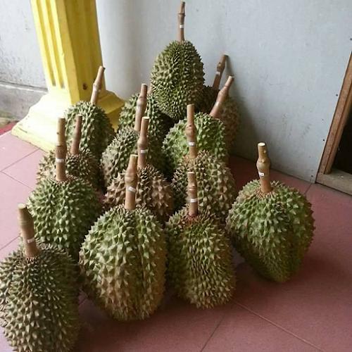 tips cara menanam durian montong cepat berbuah APK