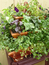 Photo: Triolife planter filled with cilantro, basil, mint, and edible flowers.  Placed on a table for easy access at parties.