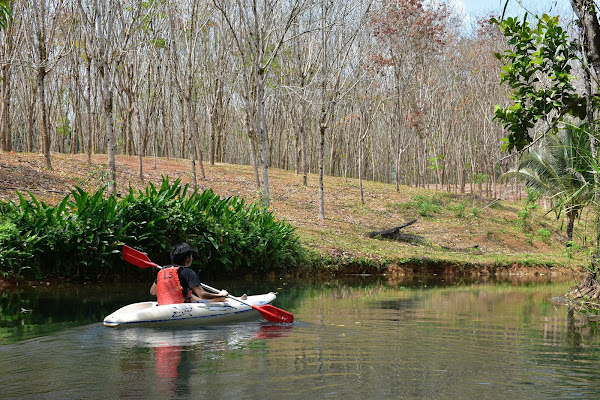 Paddle along the Sra Kaew river surrounded by rubber plantations
