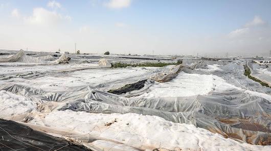 Vista de algunos de los invernaderos derrumbados por el granizo.