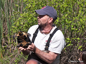 Photo: Bryan Windmiller with Blanding's Turtle