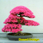 Bonsai Design icon