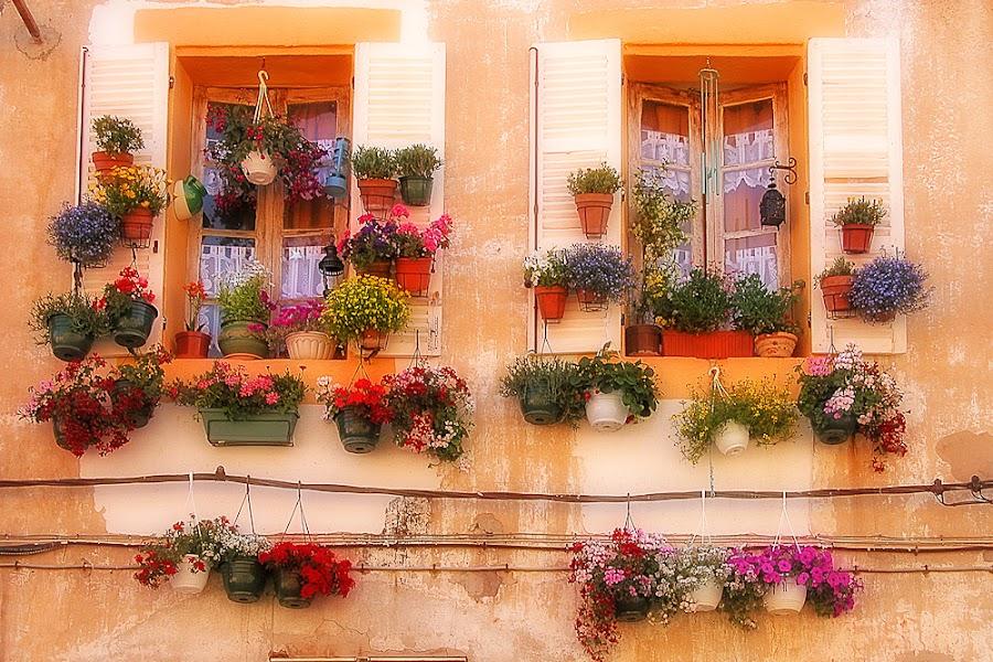 Provence by Jean Luc Julien - City,  Street & Park  Neighborhoods