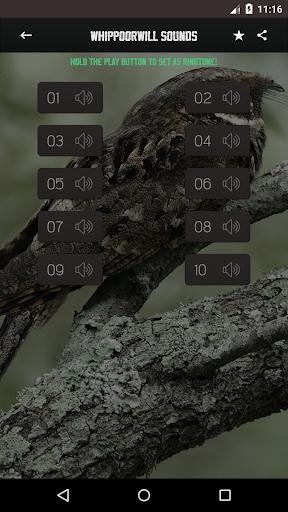 Whippoorwill bird sounds