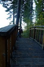 Photo: Huge cedar trees; smelled terrific
