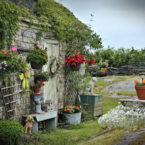 She Shed By the Sea Shore by Lena Arkell - Buildings & Architecture Other Exteriors ( red, shed, flowers, green, cottage )