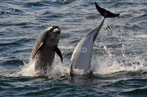 Dolphin Illusion