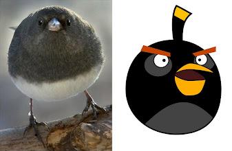 Photo: Black Angry Bird