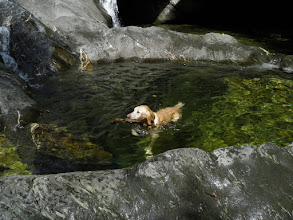 Photo: Swimming at Hamilton Falls, Jamaica State Park by Linda Carlsen-Sperry.