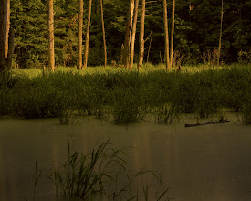 Photo: It's a swamp When we bought the property 20 years ago it waseuphemistically referred to as wetlands. It's a swamp, and I've grown to love it.  #365project curated by +Simon Kitcher+Patricia dos Santos Patonand +Vesna Krnjic  #landscapephotography curated by +Margaret Tompkins+Carra Riley+paul t beard+Ke Zengand +David Heath Williams