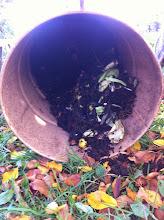 Photo: a hordó tetejében még nyers a zöldség.
