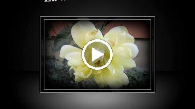 Video: Trandafir (Rosa) - La multi ani prieteniei - Facebook, Edith Klaubert - 2017.09.30 A.M.C. https://www.facebook.com/catalina.mariaana/posts/1937646729596409?pnref=story Edith https://www.facebook.com/catalina.mariaana/posts/1937646729596409?pnref=story