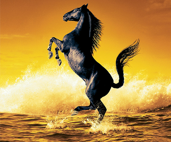 horse live wallpaper android apps on google play