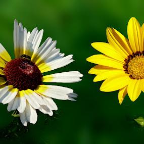 by Anupam De - Nature Up Close Flowers - 2011-2013