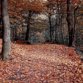 ... by Daniel Gaudin - City,  Street & Park  City Parks ( park, autumn, red leaves, art, photography,  )