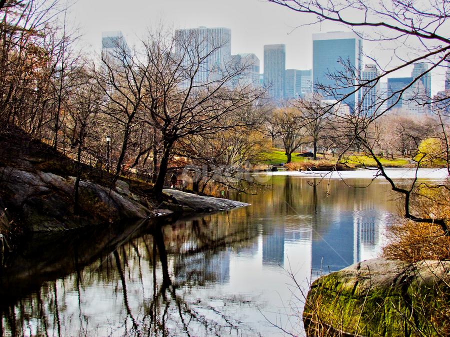 Central Park by Fabio Ferraro - Travel Locations Landmarks ( park, manhattan, new york, ny, central park )