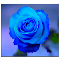 Blue Rose Live Wallpaper icon