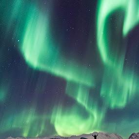 Maestro by Jon-Eirik Boholm - Landscapes Mountains & Hills ( northern lights, aurora borealis, night, norway,  )