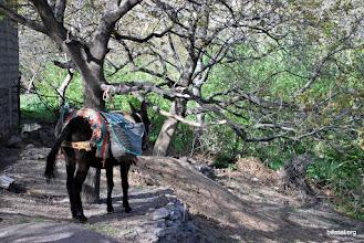 Photo: nuestra amiga la mula