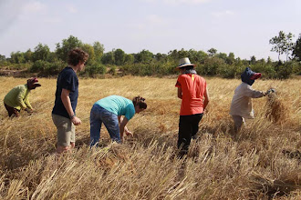 Photo: Leaning how to harvest rice