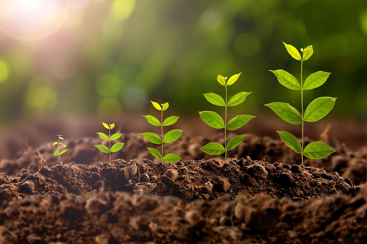 We now observe the green shoots of improvement pushing through, with President Cyril Ramaphosa co-ordinating a strategy to reverse and remove these economic roadblocks. Investor patience will be rewarded as economic growth accelerates, and with it equity returns, says the writer. Picture: ISTOCK