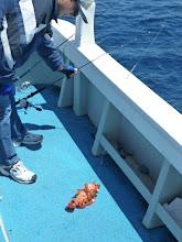 Photo: キビナゴ釣り、好調!