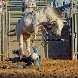 Not Good! by Twin Wranglers Baker - Sports & Fitness Rodeo/Bull Riding ( bull rider, cowboy, rodeo bull, rodeo, brahma bull, bullriding,  )