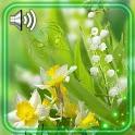 Spring HD Live Wallpaper icon