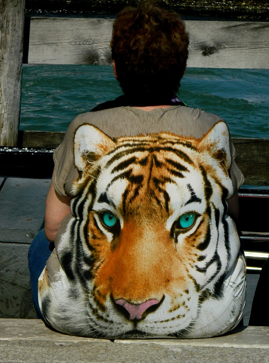 Occhi di tigre di lucaldera