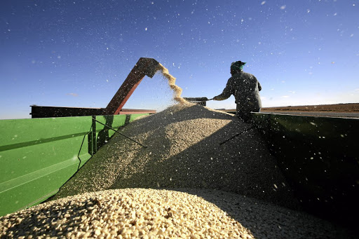 A maize worker keeps the kernels churning during a maize harvest outside Welkom in the Free State, SA.