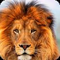 Lion HD Live Wallpaper icon