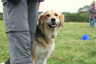 Photo: Gretl Golden Retriever X, one of the prettiest dogs I've ever seen...