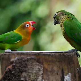 MINE! by Fanie Weldhagen - Animals Birds