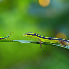 Same Stripes with my Prey by Irfan Marindra - Animals Reptiles ( reptiles, macro, natural )