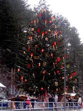 Photo: Der Christbaum fasziniert immer wieder.