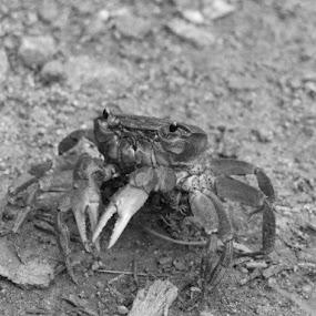 by Helen Jamieson - Animals Sea Creatures