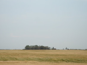 Photo: the fields are simply vast