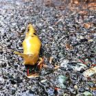 Banana slug!
