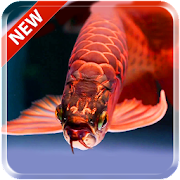 Lovely Arowana LiveWallpaper