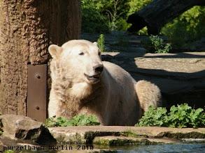 Photo: Einen schoenen guten Morgen wuenscht Knut :-)